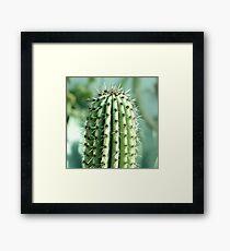 cactus photography Framed Print
