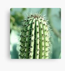cactus photography Canvas Print