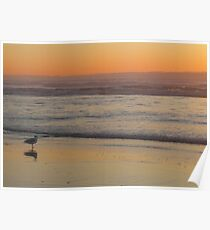Seagull Sentry at Sunset Poster