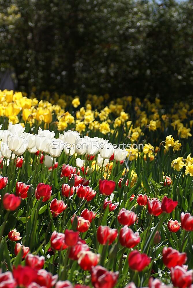 Garden Glory by Sharon Robertson