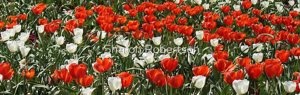 Orange & White Tulips by Sharon Robertson
