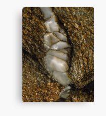 Geology; Skiathos, Greece Canvas Print