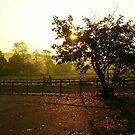 Autumn Morning by lezvee