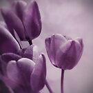 Purple tulips by Mitch  McFarlane