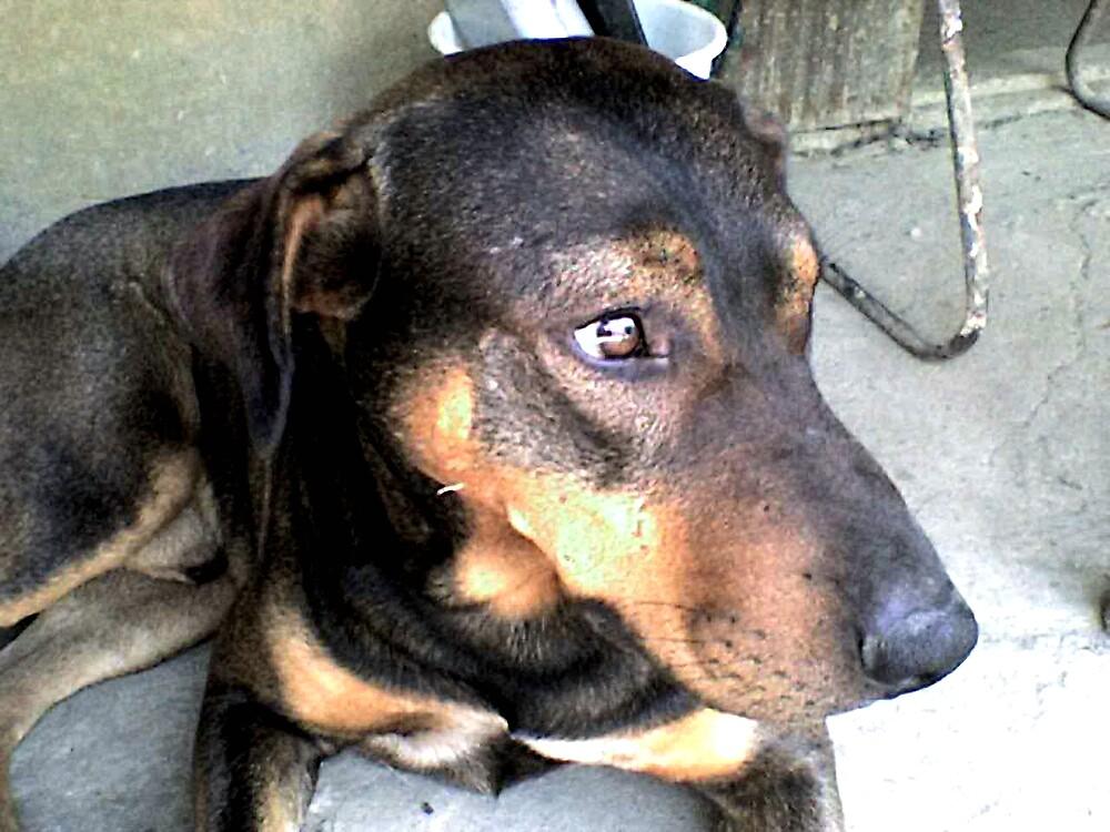 Dog by boki2008
