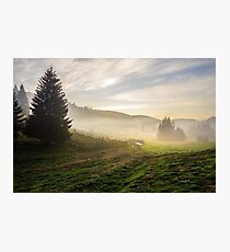fir trees on  hillside meadow in fog before sunrise Photographic Print