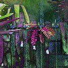 Secret Garden by Gordon Beck