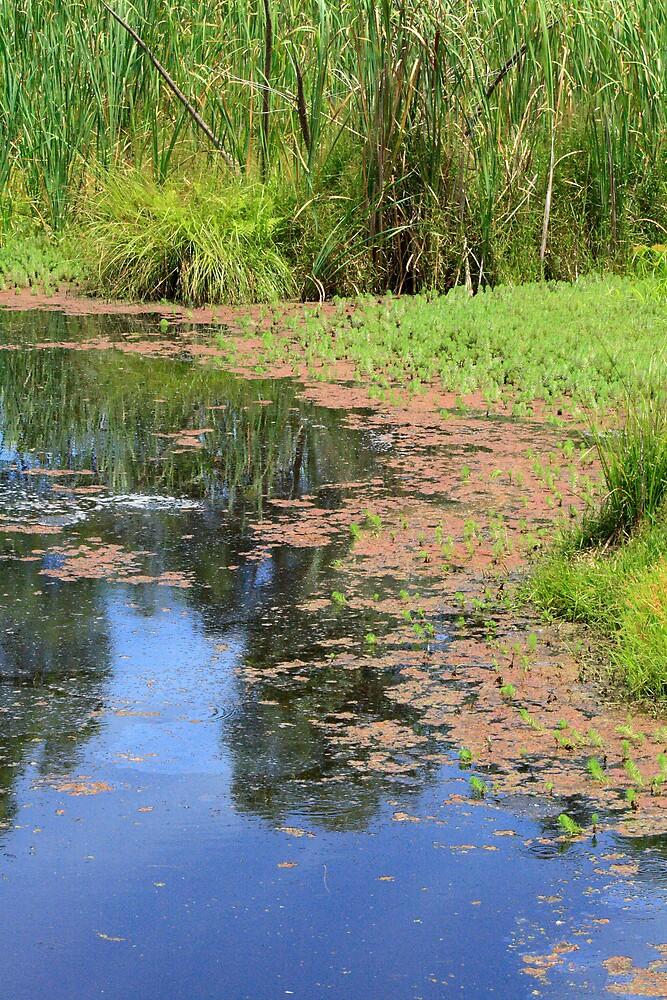 Wetland, Warriewood by Spirit Level Creations