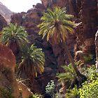 Wadi Ruweir  by MichaelBr