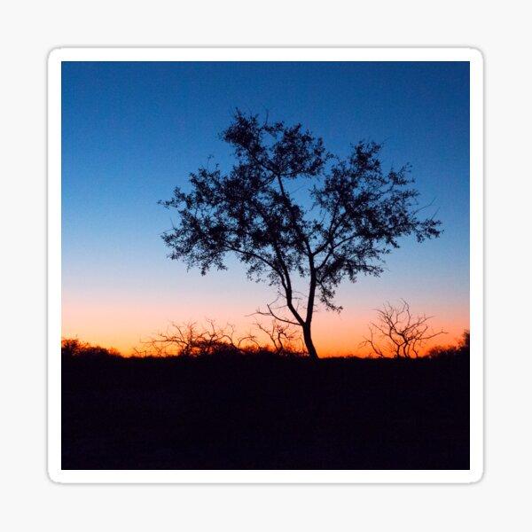 Tree Silhoette at Sunset Sticker