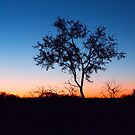 Tree Silhoette at Sunset by Leonie Mac Lean