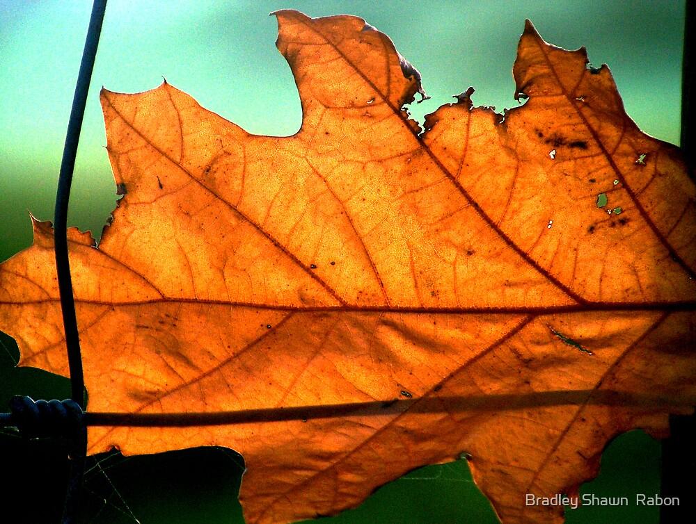 """""""Autumn Leaf"""" by Bradley Shawn  Rabon"""
