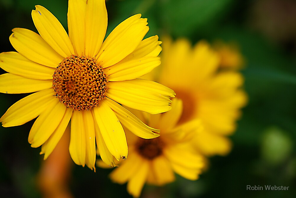 Yellow by Robin Webster