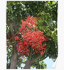 Flame Tree Branch Poster