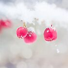 Wild Winter Berries by PaulaOhreen