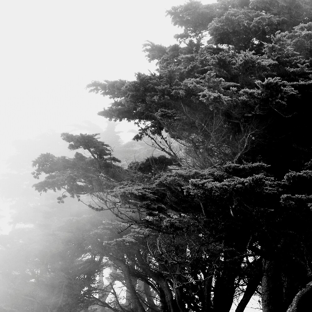 GOLDEN GATE PARK PINES IN MIST by Thomas Barker-Detwiler
