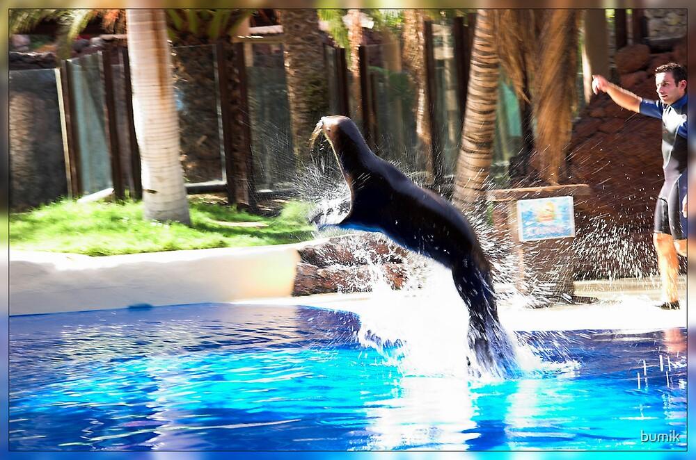 Sea Lion by bumik
