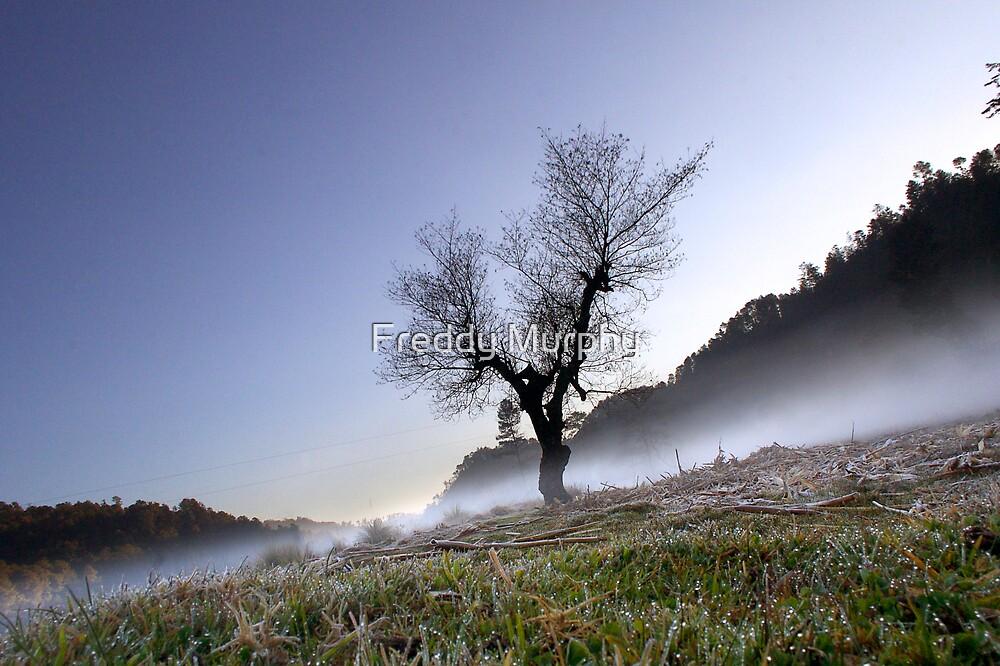 Tree by Freddy Murphy