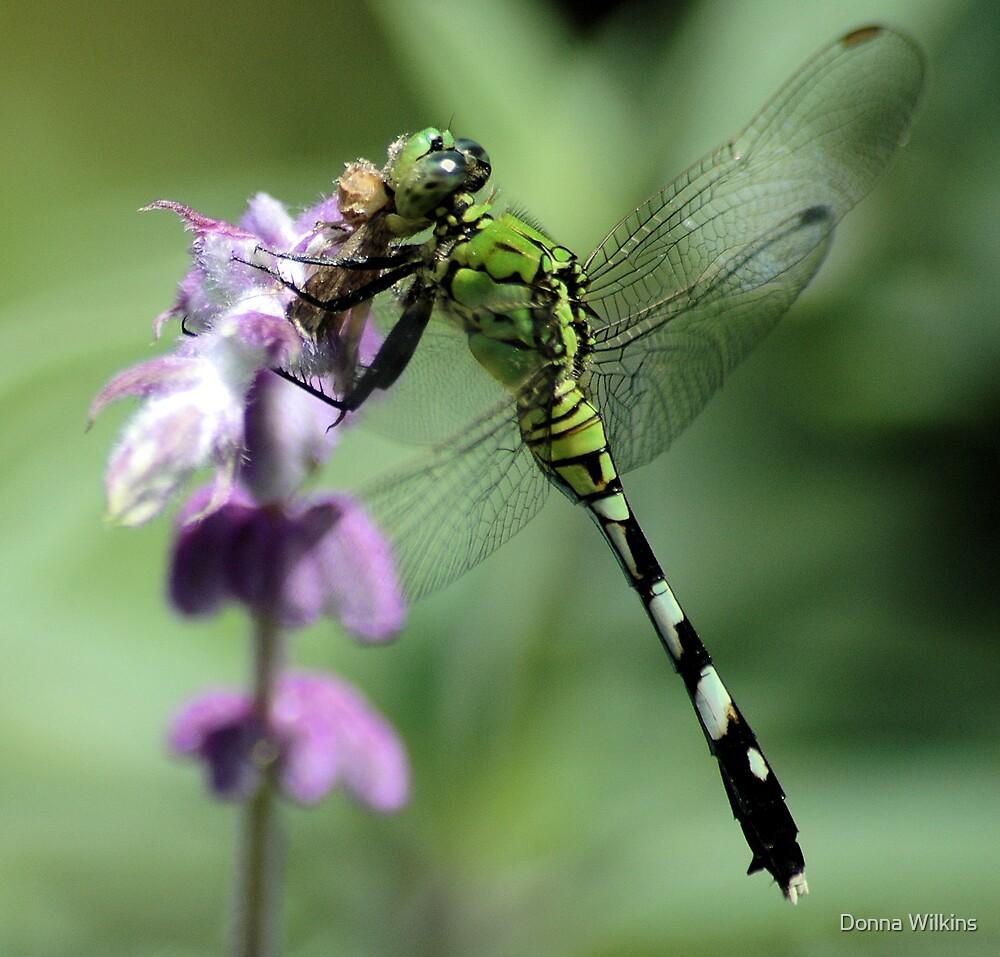 Moth Munchin' by Donna Adamski