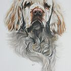 Clumber Spaniel by BarbBarcikKeith