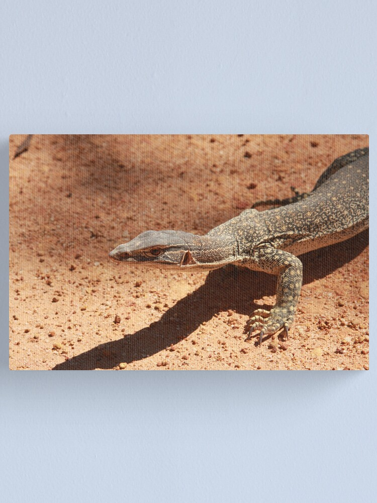 Alternate view of Sand goanna – Varanus gouldi Canvas Print