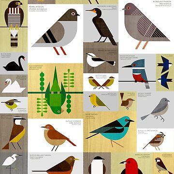 São Paulo Birds by scottpartridge