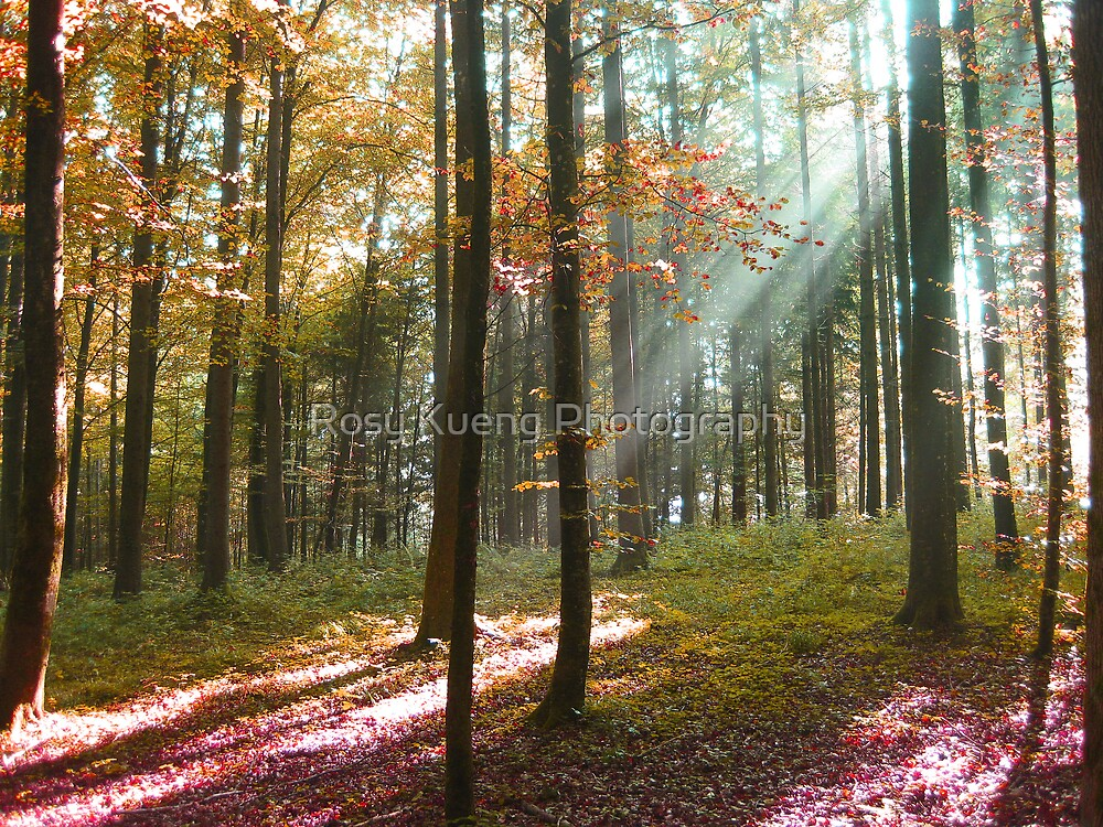Glorious Morning by Rosy Kueng Photography
