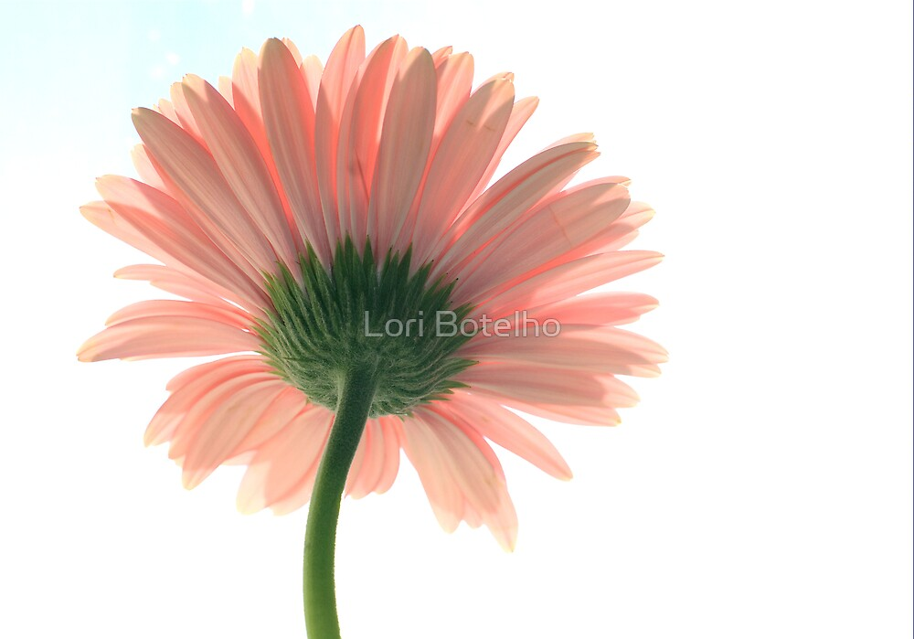 flower and light by Lori Botelho