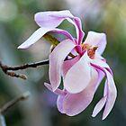 One Magnolia by Evita