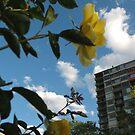 City Flowers by CassPics