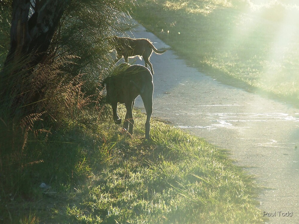 Morning Walk by Paul Todd