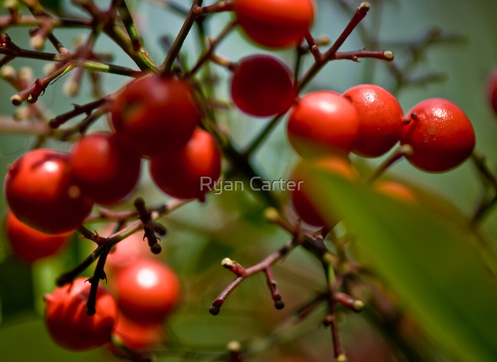 Berry Nice ...... by Ryan Carter