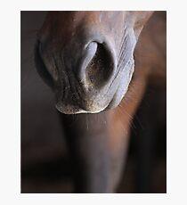 Horse Muzzle Photographic Print