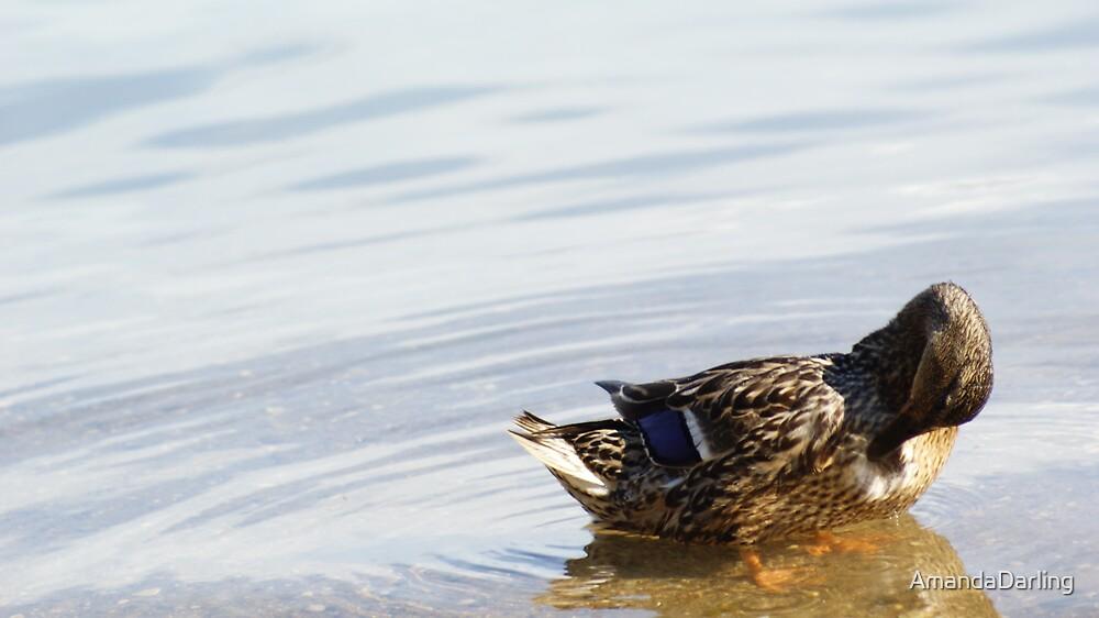 Skimming the water by AmandaDarling