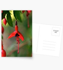 Single Wild Fuchsia Flower, Loch Na Fooey Postcards