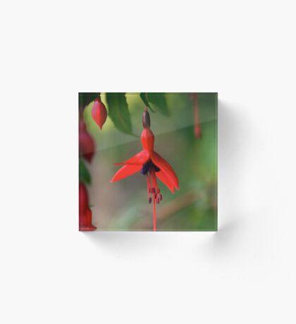 Single Wild Fuchsia Flower, Loch Na Fooey Acrylic Block