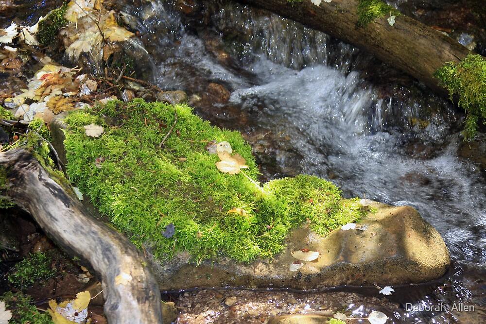 Moss Rock by Deborah  Allen