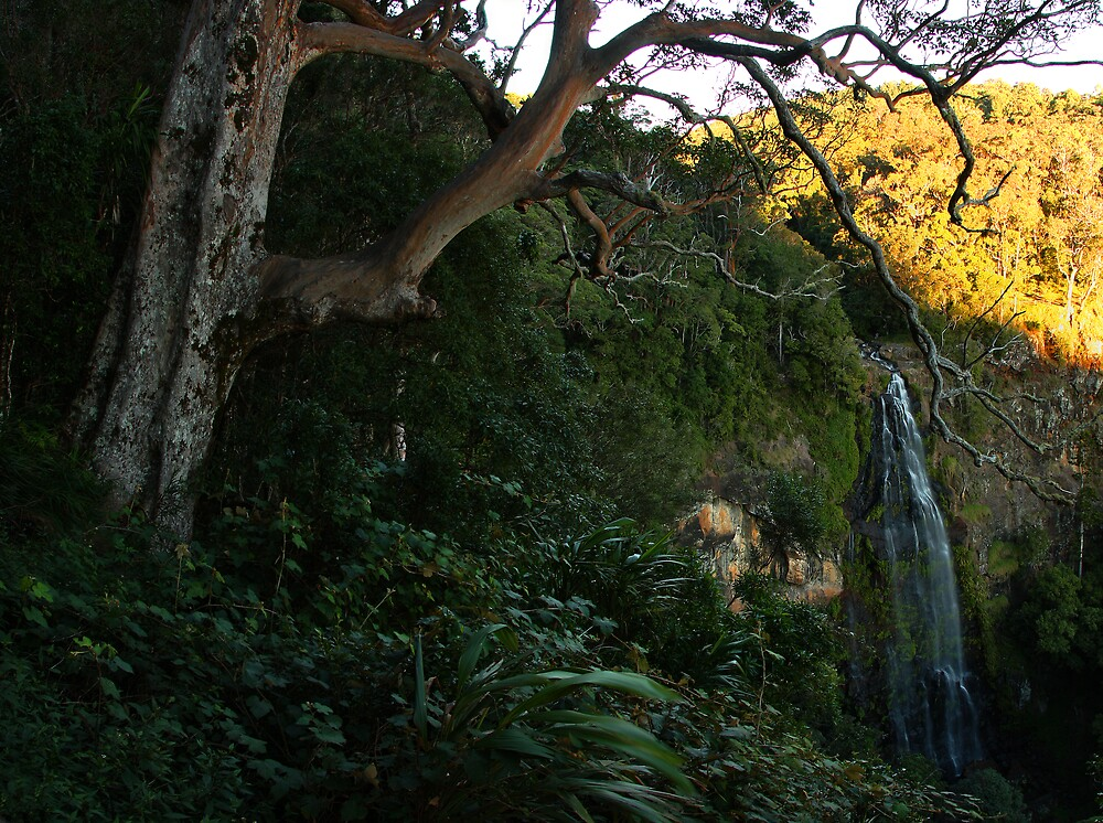 Moran's Falls, Lamington National Park. by David James