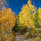 Along the Trail by Gary Lengyel