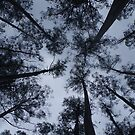 Mountain Ash canopy by Aussiebluey