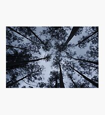 Mountain Ash canopy Photographic Print
