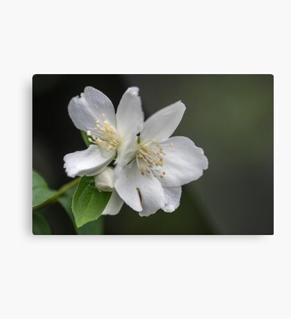 White Spring Flowers Metal Print