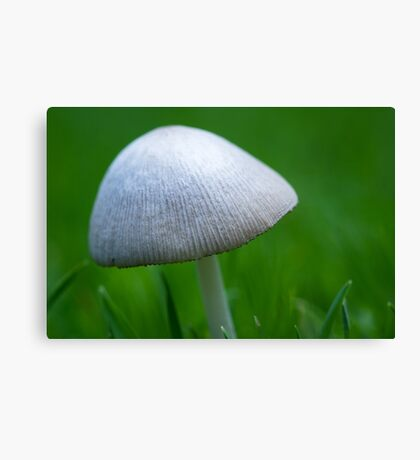 A Wee Little Mushroom Hiding in the Grass Canvas Print