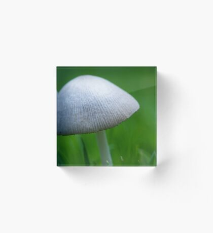 A Wee Little Mushroom Hiding in the Grass Acrylic Block