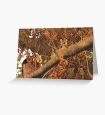 Red Panda Sleeping Greeting Card