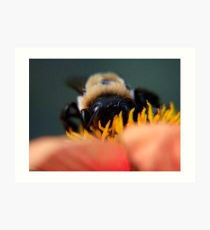 Bee's Eye View Art Print
