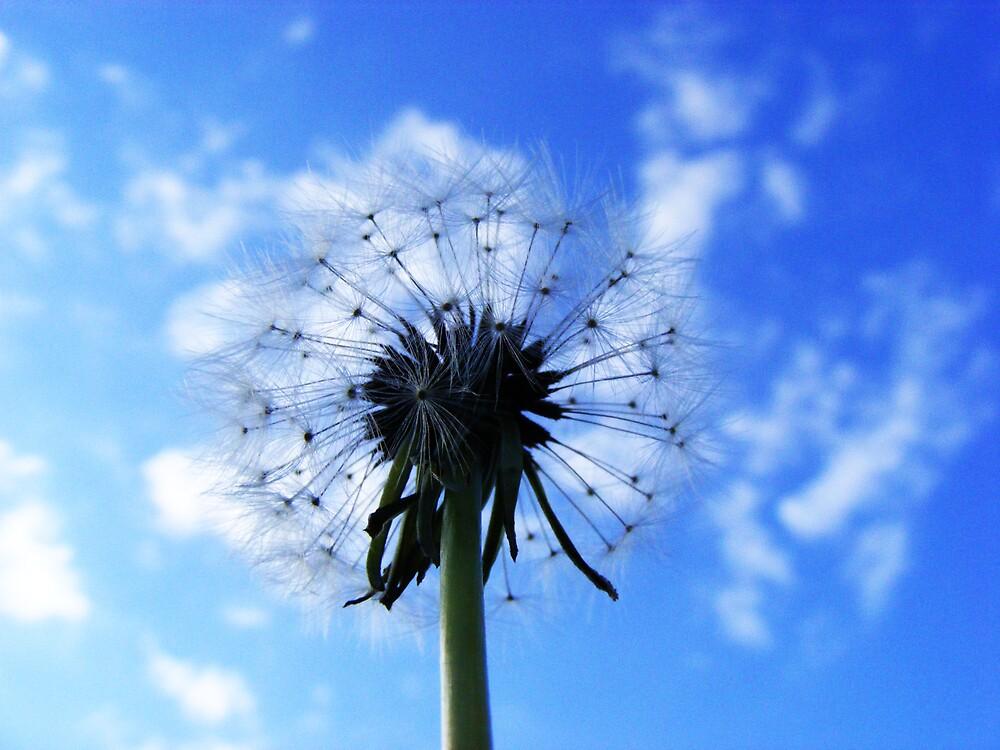make a wishh! by SwaySwayBabey8D