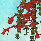 Lipstick Plant by Margaret Stevens
