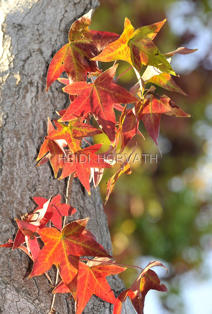Just Fall. by HEIDI  HORVATH
