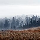 Lost In Fog by Tordis Kayma